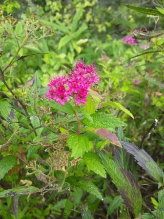 DSC_0367 ブログ用 秋の庭1.jpg